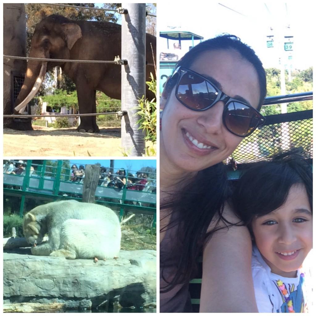 San Diego Zoo 3