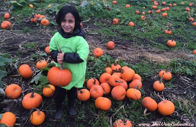 at laity's pumpkin patch