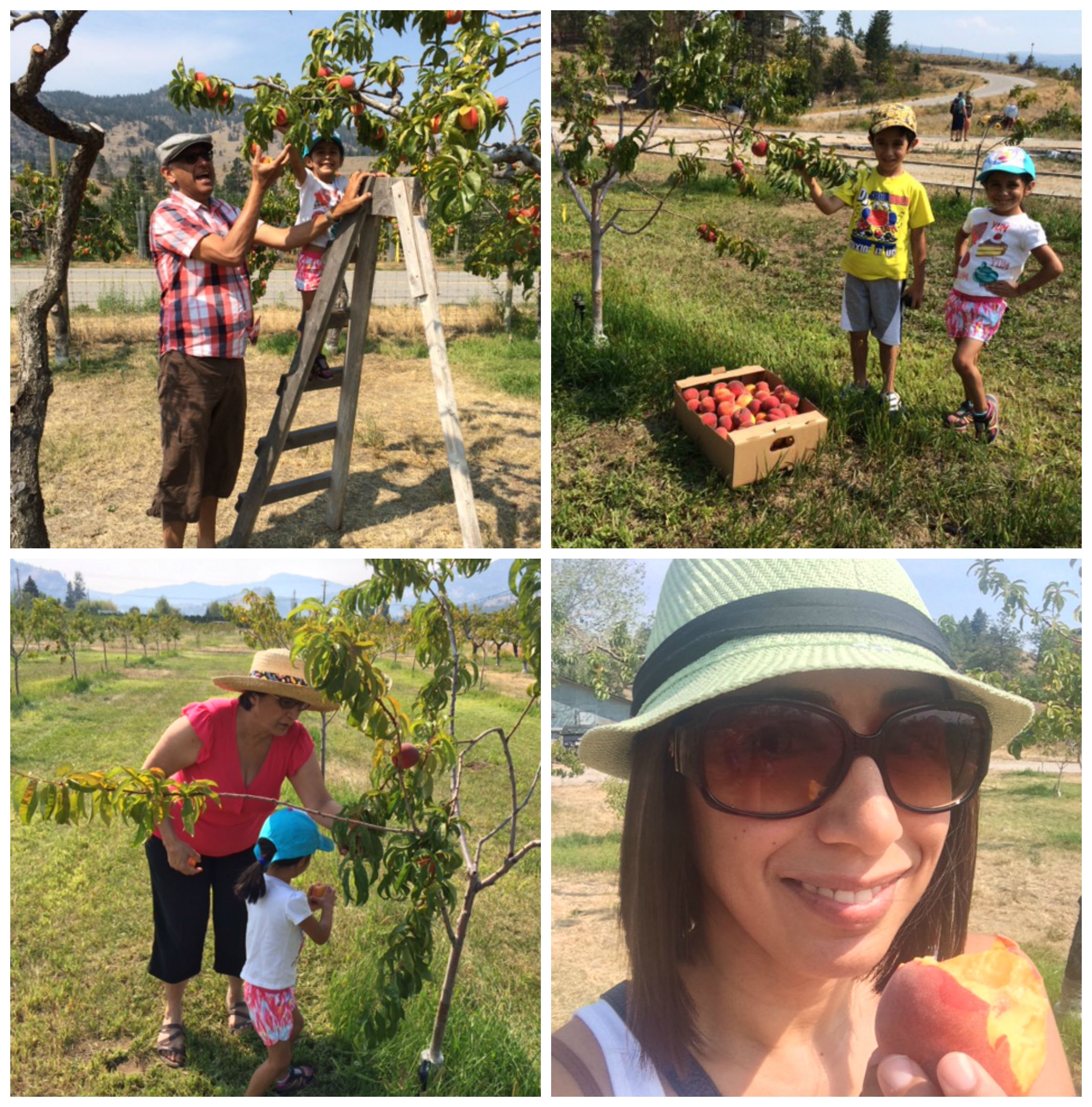 Peach picking Collage