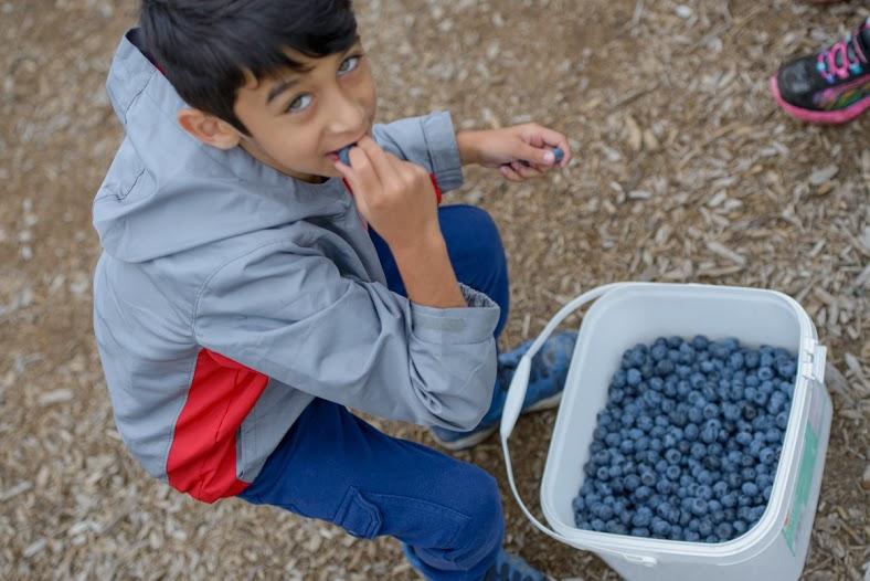 tasting BC Blueberries