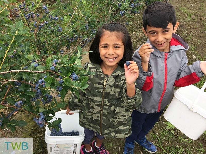 Blueberry picking - kids