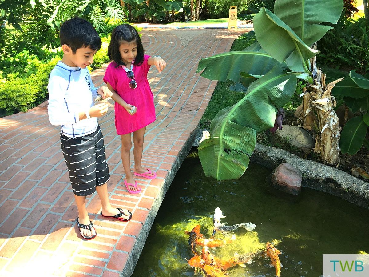 Family Vacation - feeding the fish