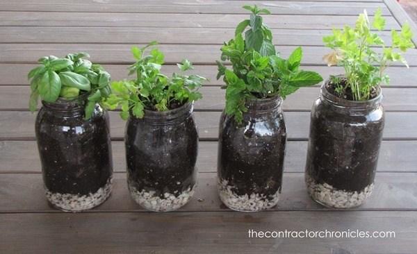Mason Jar Hacks - herb garden